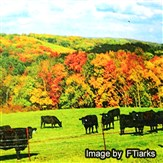 New England Fall Foliage #1