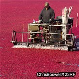 Cape Cod Fall & Cranberry Harvest