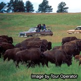 Black Hills Buffalo Roundup