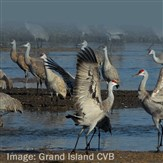 Sandhill Cranes, Pelicans & Prarie Chickens